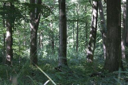 Une autre forêt est possible | Nature & Planète | Scoop.it
