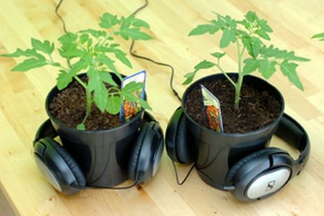 Plants Respond to Music | Permaculture and Green Living | Scoop.it