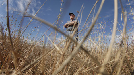 Grasslands Get Squeezed As Another 1.6 Million Acres Go Into Crops | Sustainable Futures | Scoop.it
