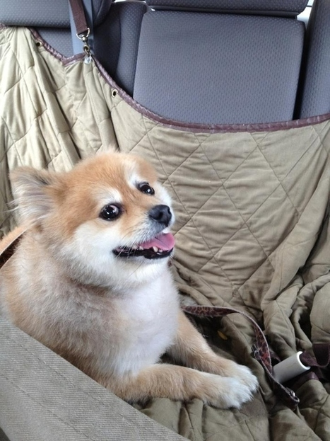 20 Ecstatic Shelter Dogs On Their Way Home For The First Time | All Things Dog | Scoop.it