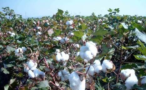 H&M stops using cotton from Turkmenistan, Syria | Fashion bloggers & Brands | Scoop.it