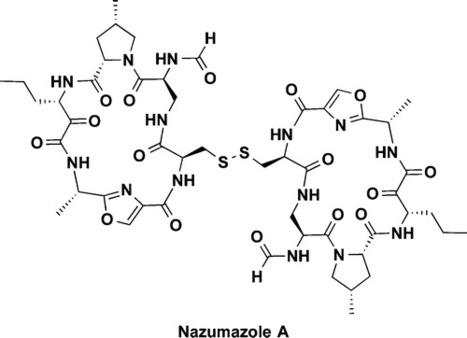 Nazumazoles A–C, Cyclic Pentapeptides Dimerized through a Disulfide Bond from the Marine Sponge Theonella swinhoei   LGN   Scoop.it