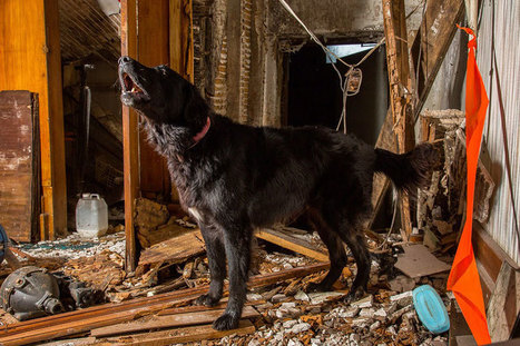 Working Dogs: Photographer Shows Some Of The Toughest Jobs For Canines | 16s3d: Bestioles, opinions & pétitions | Scoop.it