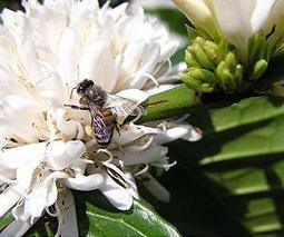 Pollination merely one production factor | Sustain Our Earth | Scoop.it