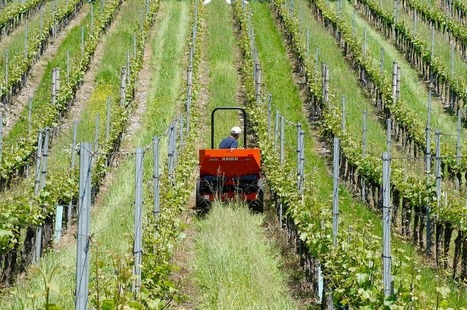 Renouveau de la viticulture au Liban | Le vin quotidien | Scoop.it