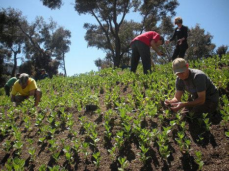 Company turns plant waste into free mulch for urbanfarming | Vertical Farm - Food Factory | Scoop.it