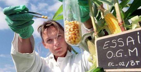 Une étude russe qui prouve que les OGM stériliseront l'humanité au bout de 3 Générations - rusty james news | CAP21 | Scoop.it