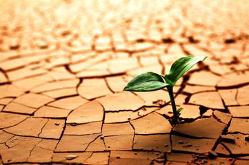 Réchauffement et catastrophe alimentaire, le discours s'élargit | The Blog's Revue by OlivierSC | Scoop.it