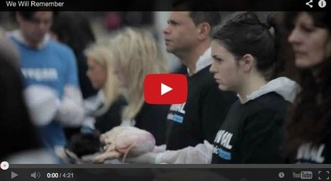 Then I Will Hold You In My Arms: A Must See Tribute to Animal Victims | Animal Abuse. | Scoop.it