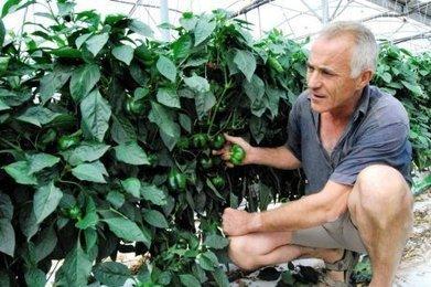 Fruits et légumes : le manque de soleil fait flamber les prix | Agriculture en Dordogne | Scoop.it