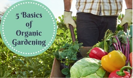 5 basics of organic gardening [infographic] | Eco-Friendly Lifestyle | Scoop.it