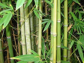Andrómeda72: la Tormenta Nebular: El arte marcial del bambú | VIM | Scoop.it
