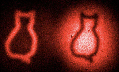 Scientists catch Schrödinger's cat with quantum physics | Outbreaks of Futurity | Scoop.it