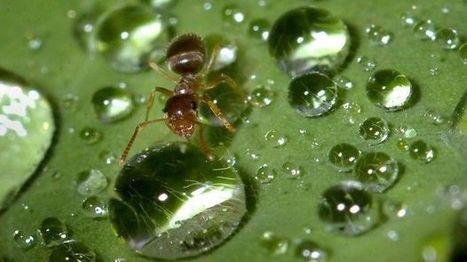 La hormiga: una solución para el calentamiento global | Ciencias de la vida | Scoop.it