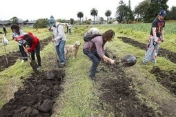 """""""Occupy the Farm"""" coalition takes over land tract near Berkeley to feed localcommunity 
