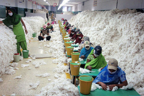 India's forgotten cotton-picking children | Year 7 Geography Global Issues | Scoop.it