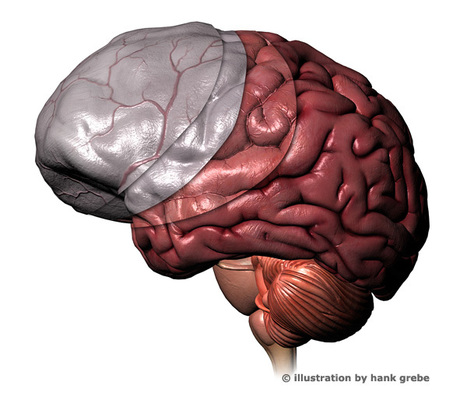 MediaPost Publications Neuromarketing: How Men's, Women's Brains Differ 05/22/2012 | nicheprof on social media | Scoop.it