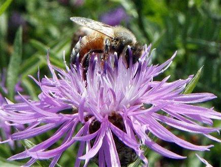 No Bees No People? | Nourish | Scoop.it