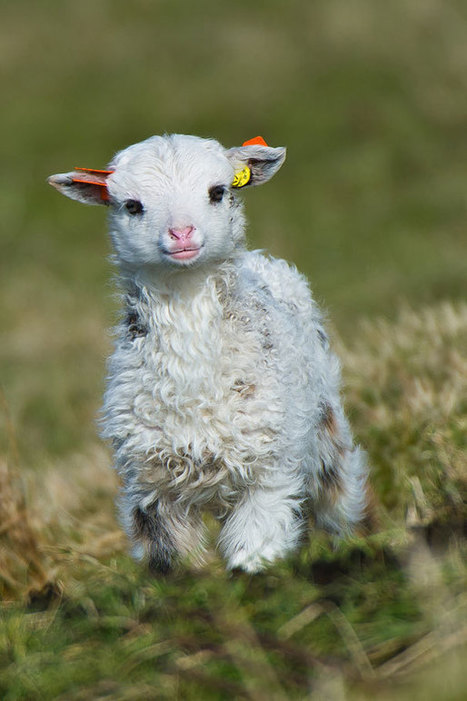 30 Baby Animals That Will Make You Go 'Aww' | The Blog's Revue by OlivierSC | Scoop.it