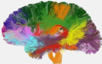First micro-structure atlas of the human brain completed | Artificial Intelligence | Scoop.it