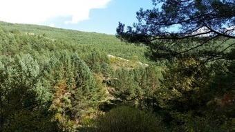 Despertar los montes con una fiscalidad forestal específica | Ordenación del Territorio | Scoop.it