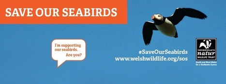 SOS - Urgent Appeal - Save Our Seabirds : The Wildlife Trust of South and West Wales | Leading for Nature | Scoop.it
