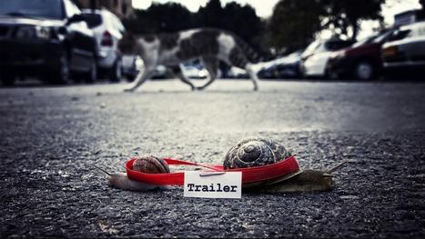 Attractive Snail Cat Road Tape HQ Pics #4299 Wallpaper | animaljetz.com | Animal Wallpaper | Scoop.it