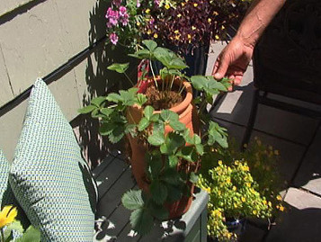 Gardening With Gutner: Plants That Thrive In Shady Spots - CBS Local   Gardening   Scoop.it