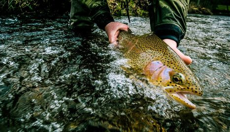 Tandem Tactics for Trout. Part One: Touching The Surface | Fly ... | Fly Fishing | Scoop.it