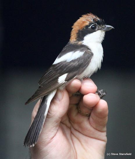 Bardsey Wildlife: Spring 2012 Review | Birds | Scoop.it