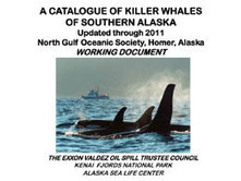 Killer #Whales of southern #Alaska • North Gulf Oceanic Society | Rescue our Ocean's & it's species from Man's Pollution! | Scoop.it