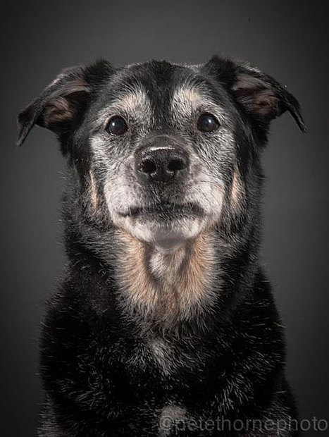 Old Faithful: Warm And Intimate Photos Of Really Old Dogs | Organic Pathos | Scoop.it