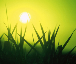 The $1 billion weather app: why Monsanto is betting the farm on smarter forecasts | Plant Based Transitions | Scoop.it