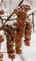 Canada proposes national Icewine regulations to curb fraud | Daily wine news - the latest breaking wine news from around the world | News | decanter.com | Wine cellar | Scoop.it