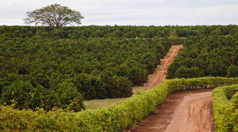 Sustainable Agriculture Guiding Principles | Climate Smart Agriculture | Scoop.it