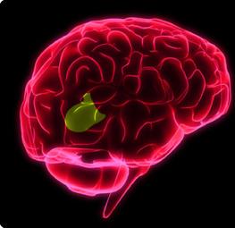 """Broca's Brain"" --New Findings Announced | Brain Circus | Scoop.it"