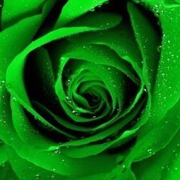 L'importanza dei colori nel web - Pizuro | Web marketing | Scoop.it