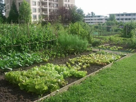 Revue Projets de paysage : Des jardiniers à l'épreuve du sol urbain | ECOLOGIE BIODIVERSITE PAYSAGE | Scoop.it