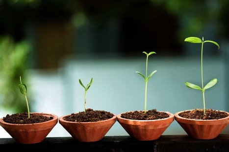 Starting a Startup: Laying the Groundwork for Your Own Company | Web Design, Web Development, SEO, SMO | Scoop.it