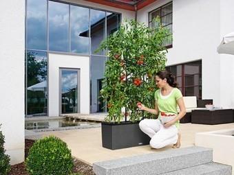 These 5 Self-Watering Planters Make Vegetable Gardening Easy | Vertical Farm - Food Factory | Scoop.it