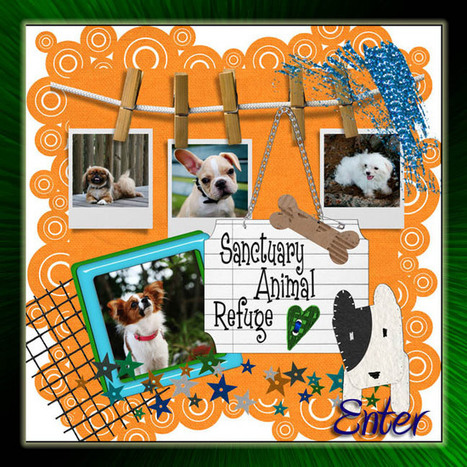 Sanctuary Animal Refuge | Sanctuary Animal Refuge | Scoop.it