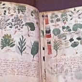 """Continúa enigma por libro escrito en un idioma desconocido y que muestra plantas que """"no existen""""   Documentos antiguos   Scoop.it"""