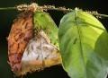 Les fourmis font de meilleurs choix en groupe | Ca m'interpelle... | Scoop.it