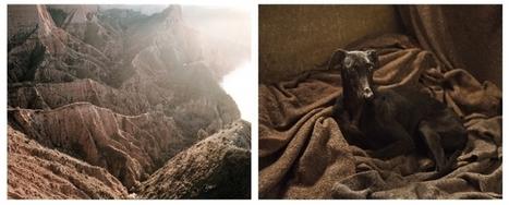 'WHERE HUNTING DOGS REST' UNE EXPOSITION DE MARTIN USBORNE À LA GALERIE PHOTO12, PARIS | Bouche à Oreille | Scoop.it