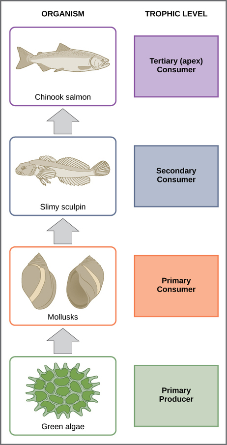 Food Chains and Food Webs - Boundless Open Textbook   Agribusiness   Scoop.it
