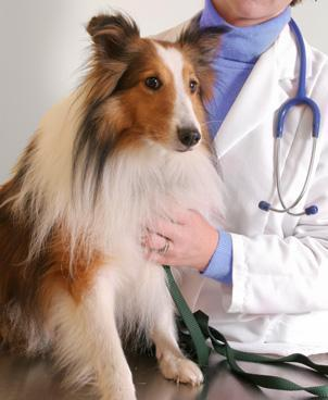 Roundstone Mobile Veterinary Service | Mobile Vet Service provides complete range of Veterinarian services at-home | Scoop.it