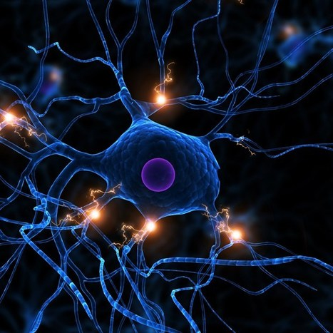 Biomedical engineers grow 3D brain tissue in lab | AI_interfaces_cogsci | Scoop.it