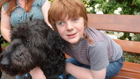 Autism Spectrum Disorder study finds trained dogs keep children safer | Article Library for Autism | Scoop.it