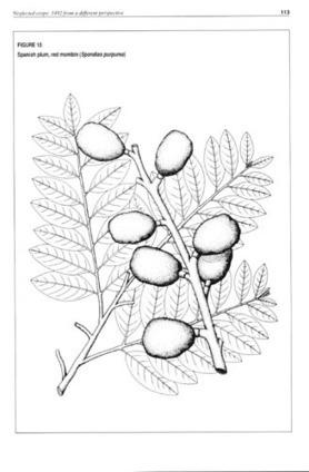 La agricultura en Mesoamérica Jocote, ciruela (Spondias purpurea L.) | Ciruela (Spondias Purpurea L.) | Scoop.it