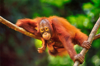 Doomed for extinction - Free Malaysia Today | World Environment Nature News | Scoop.it